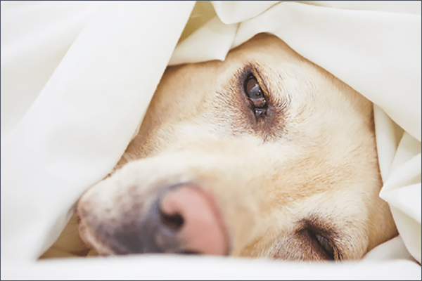 Zoetis offers client checklist for controlling canine influenza virus