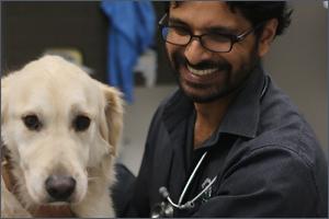 Australian vet receives 2018 WSAVA, Hill's Next Generation award