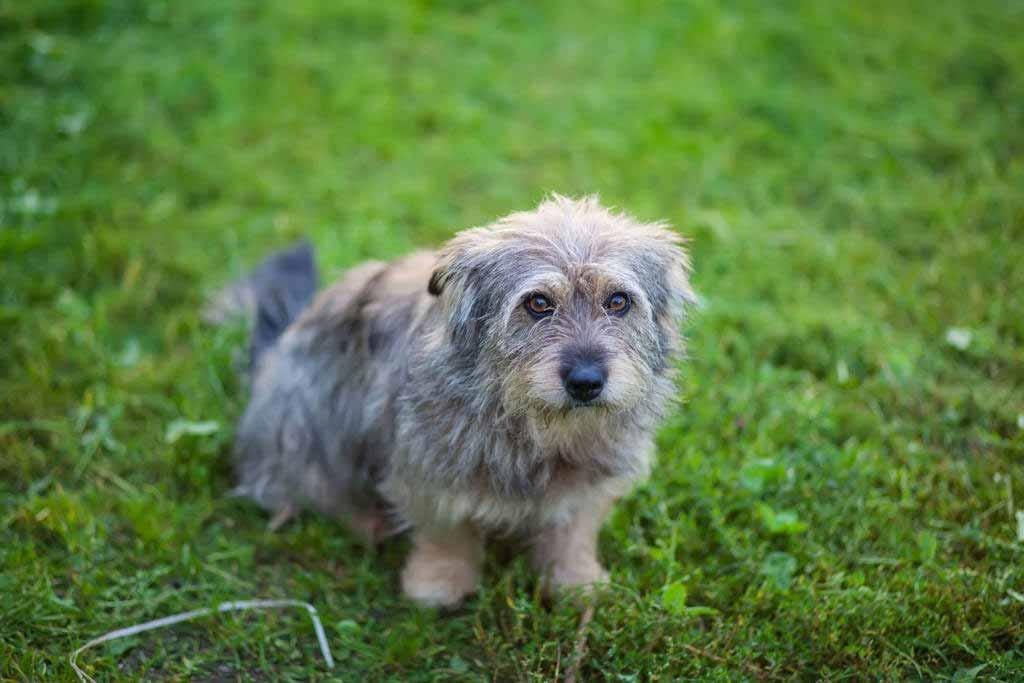 Peeva, Covetrus helping to identify lost pets