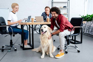 Pets can improve workplace communication, collaboration
