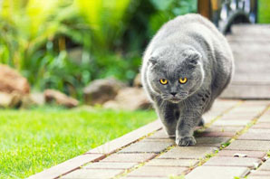 Cats' weight on the rise