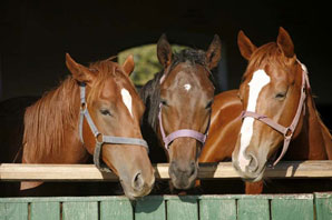 Horse deaths linked to compounded EPM drugs