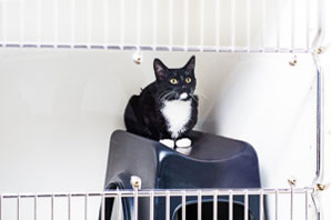 Five Ideas for Feline-Friendly Practice Updates