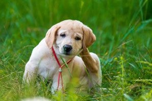 Veterinarians urged to discuss skin health with clients