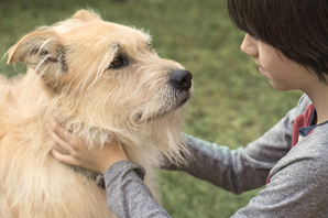 Could Long-Lasting Flea & Tick Protection Enhance Pet Owner Adherence?