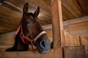Racehorse safety focus of California bill