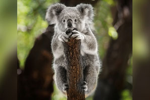 $1-million grant aims to preserve, restore Aussie wildlife ravaged by deadly fires