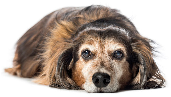 Updated euthanasia guidelines help ensure more humane passing