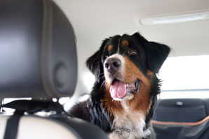Pet travel compliance simplified with digital filing software