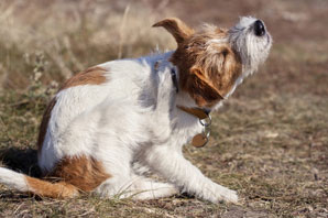 Canine atopic dermatitis meds revenue set to surpass $2.4B by 2029