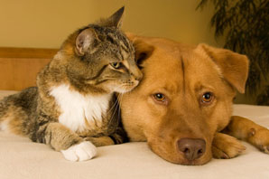 Pets unlikely to pass COVID-19 to humans, other animals