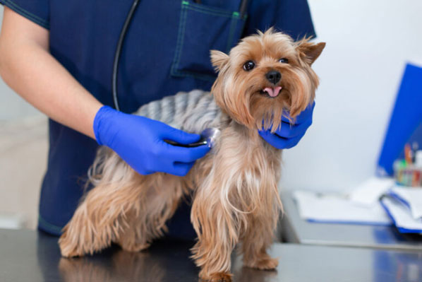 Is a heartworm vaccine on the horizon?