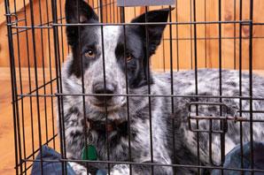 New legislation ensures immunization of imported dogs
