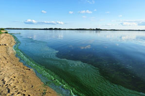 Blue-green algae: What it is and why it's so deadly
