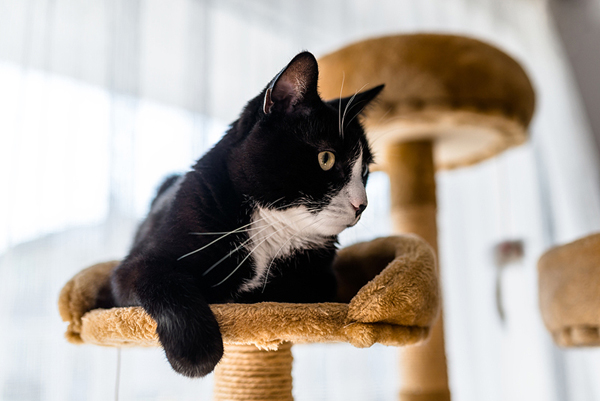 Earlier-than-usual neutering can ease sexual aggression in male cats