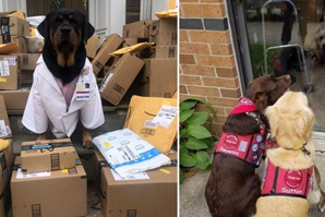 """Frontline workers get helping paw from """"Dogtor"""" Loki"""