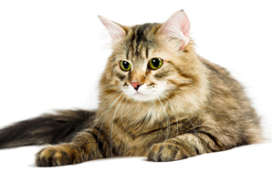 Individualized preventive care plans improve cat lives