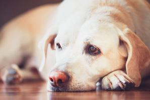 Animal Pain Awareness Month kicks off