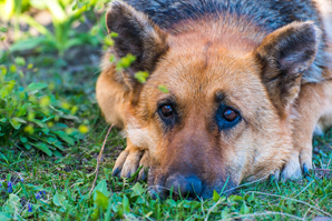Joint lubricant could signal canine OA