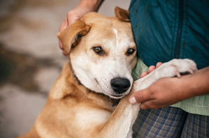 Prep, considerations required to save animal lives in emergencies