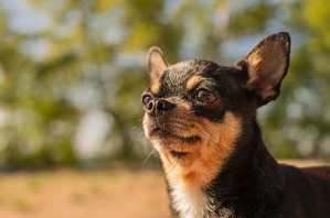 #CurePetCancer aims to defeat deadly disease