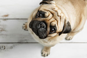 Do your clients have a contingency COVID pet-care plan?