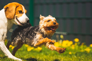 Is your practice in Charleston, W.Va.? Watch out for roundworms