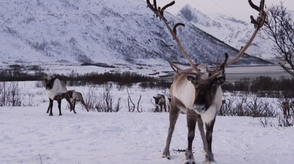 Santa's official veterinarian OKs reindeer for flight