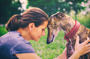 Anesthetic malignant hyperthermia in greyhounds