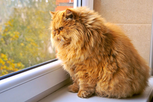 Arthritis, UTIs among top obesity-related pet insurance claims