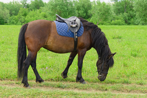 Horse therapy could benefit adults with Parkinson's disease