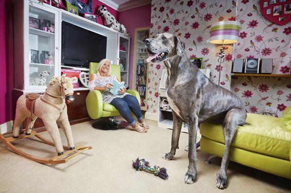 World's tallest dog passes away