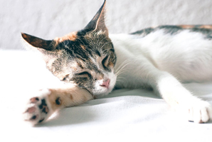 Feline-friendly tactics help boost the bottom line