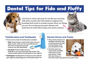 Download our dental care tips infographic