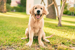 Canine genetics, health to be explored at summit