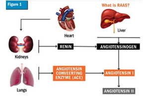 A wholehearted approach to treating the cardiac patient