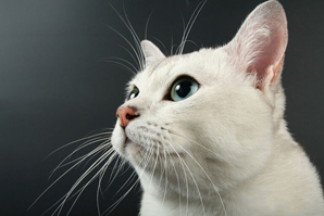 Cat foundation rebrand reflects global vision