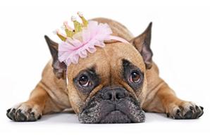 'Princess' endures as most popular pet name