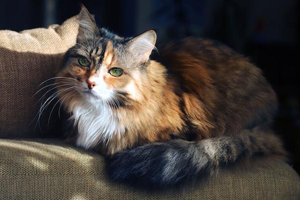 Age-specific care aids in feline patient compliance