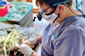 Thank you, veterinary dentistry technicians!