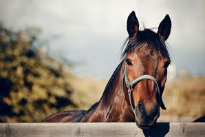 Horse pyrexia drug gets distribution deal