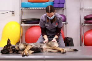 Can shockwave therapy help canine back pain?