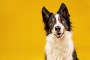 Canine health and wellness focus of advocate committee
