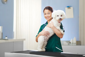 Grab the biggest discount yet on a VPN Plus+ membership this World Veterinary Day