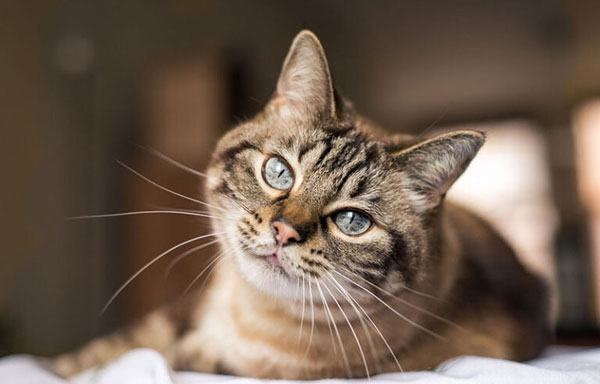 Cat food pulled due to Salmonella