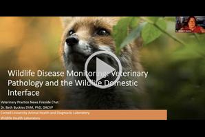 VPN Fireside Chats: Wildlife disease monitoring