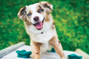 Manage Canine Diabetes