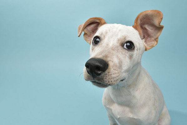 Early cancer detection can save pets' lives
