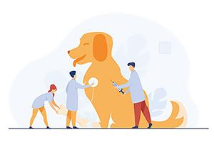 Are you under-utilizing veterinary technicians?