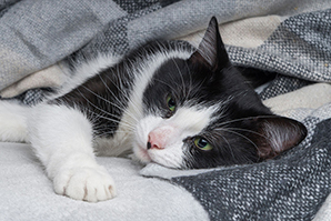 Dogs, cats can catch COVID from owners, study confirms